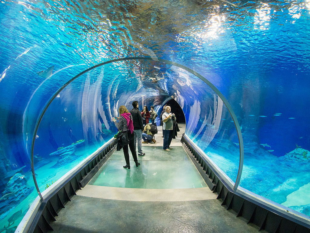 Podwodny tunel w Afrykarium – Foto: Lower Silesia Źródło: wikimedia.org
