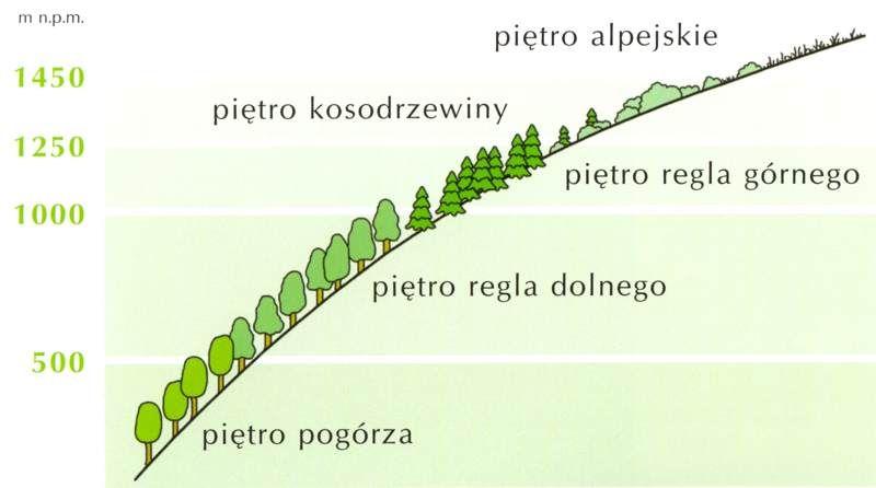 Piętra roślinności w Karkonoszach – Źródło: kpnmab.pl