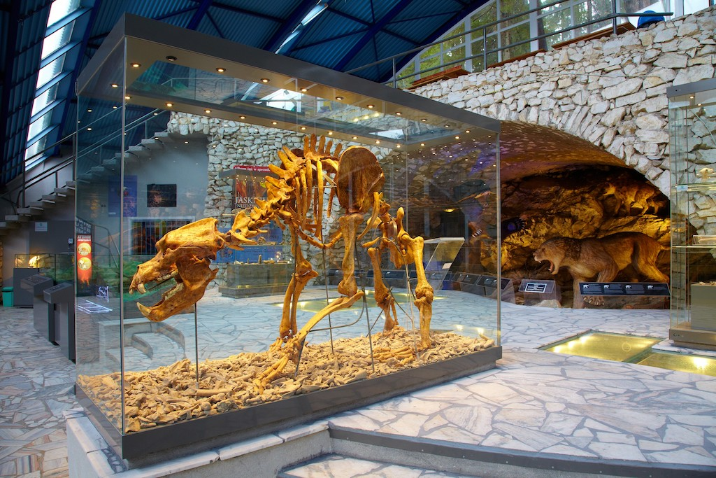 Szkielet niedźwiedzia jaskiniowego jako ekspozycja w pawilonie wejściowym